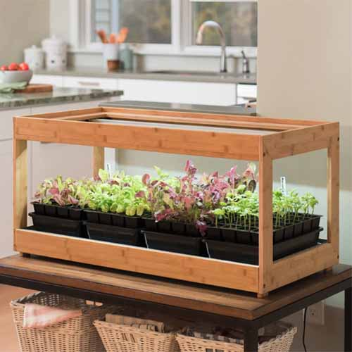 A wooden indoor growing unit containing trays of seedlings, made from bamboo, set on a table in a kitchen, with a window and sink with faucet in soft focus in the background.