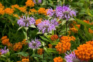 15 of the Best Native Wildflowers for the US and Canada