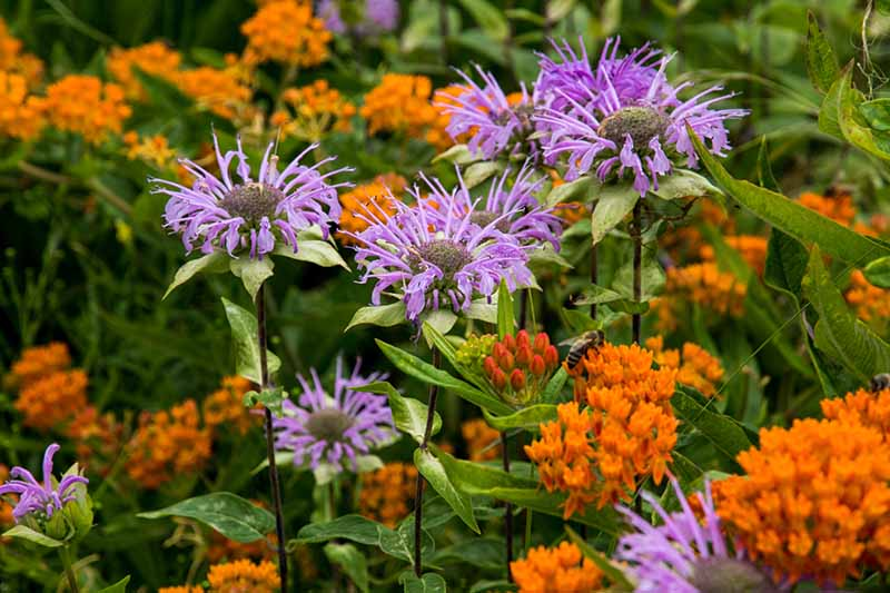 A close up horizontal image of native wildflowers growing in the garden.