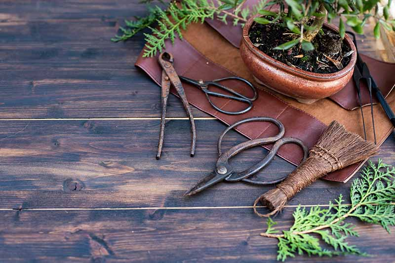 A horizontal image of a small plant and a variety of tools set on a wooden surface.
