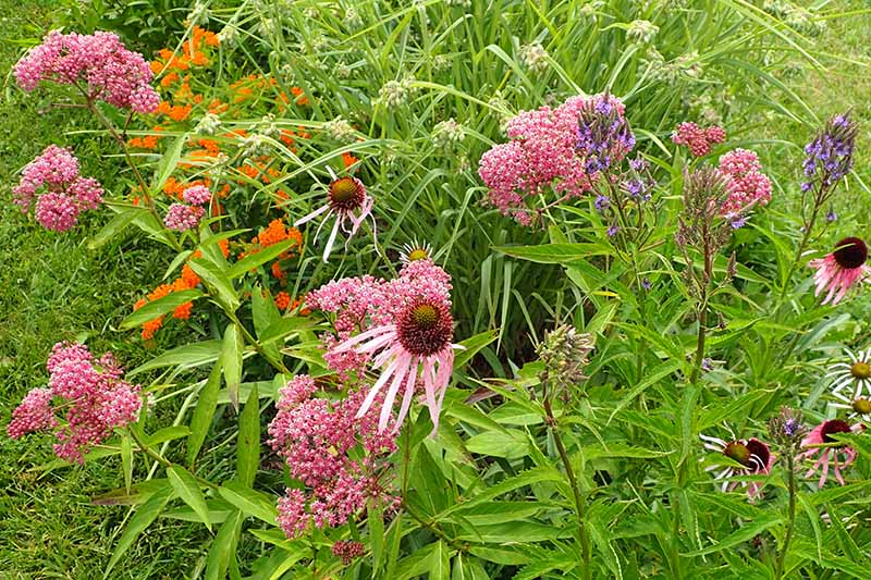 A close up horizontal image of a pollinator garden featuring native wildflowers.