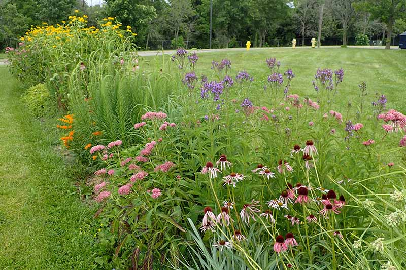 A horizontal image of a butterfly garden planted beside a large swath of lawn with trees in the background.