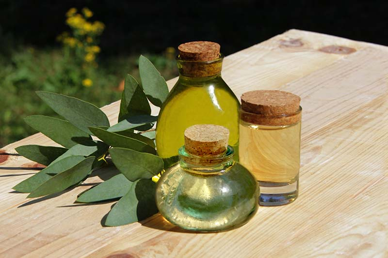 A close up horizontal image of small glass jars of eucalyptus extract set on a wooden surface in bright sunshine.