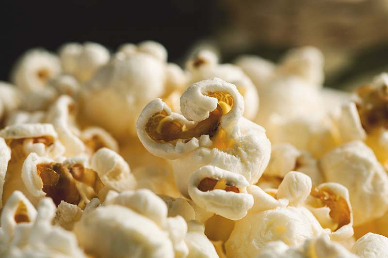 A close up horizontal image of perfectly popped corn pictured on a soft focus background.