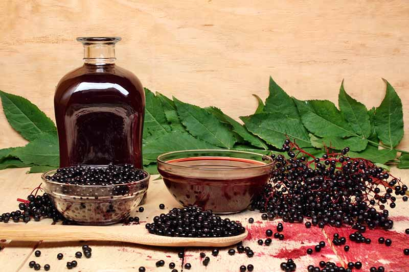 A close up horizontal image of a bottle of elderberry syrup and a bowl of fruit and leaves scattered around.