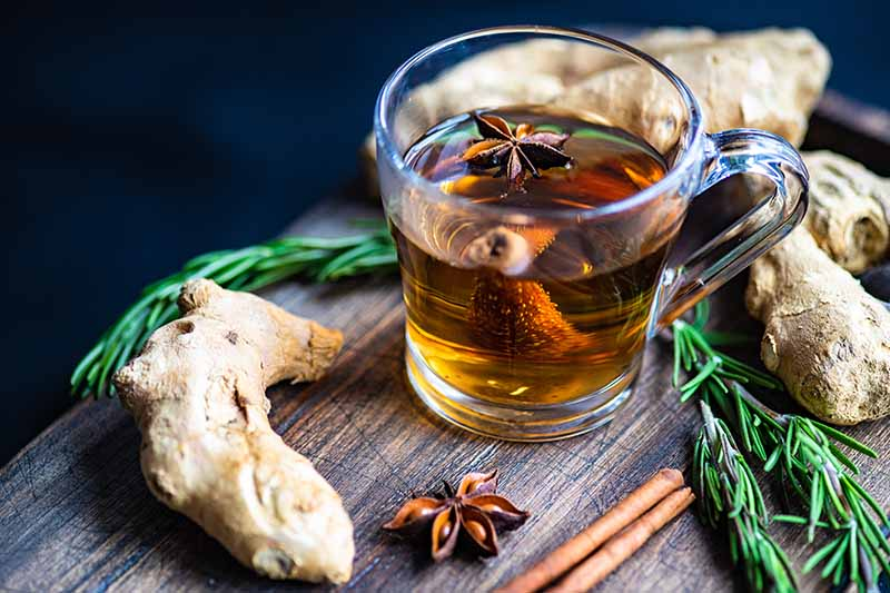 A close up horizontal image of a glass of ginger, star anise, and rosemary herbal tea set on a wooden surface.