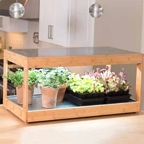 A kitchen with a small wooden lighting box containing potted plants and seedlings in trays, the structure is made from bamboo with a steel base and lid. In the background are kitchen cabinets in soft focus.
