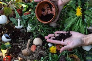 A Plant Pick-Me-Up? Tips for Composting and Gardening with Coffee Grounds
