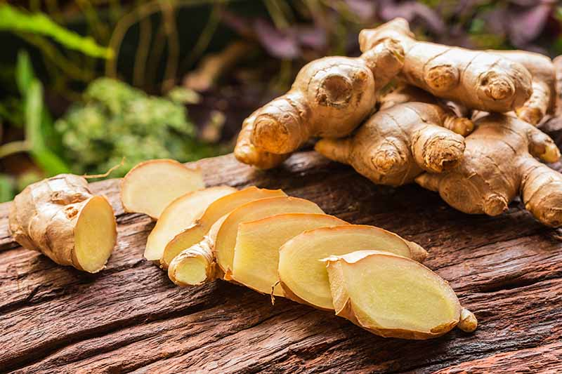 A close up horizontal image of fresh ginger root, whole and sliced on a rustic wooden surface.