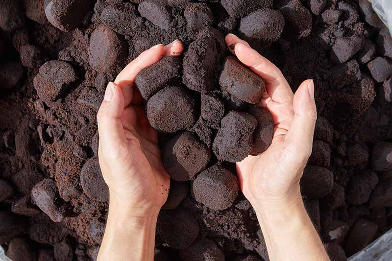 A close up horizontal image of two hands holding compacted coffee grounds from espresso machines.