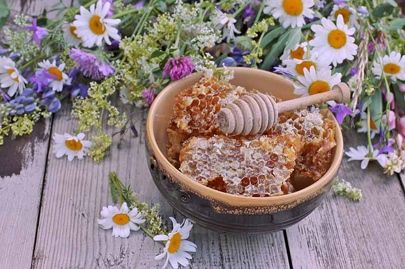A close up horizontal image of a bowl of honeycomb set on a wooden surface with wildflowers scattered around.