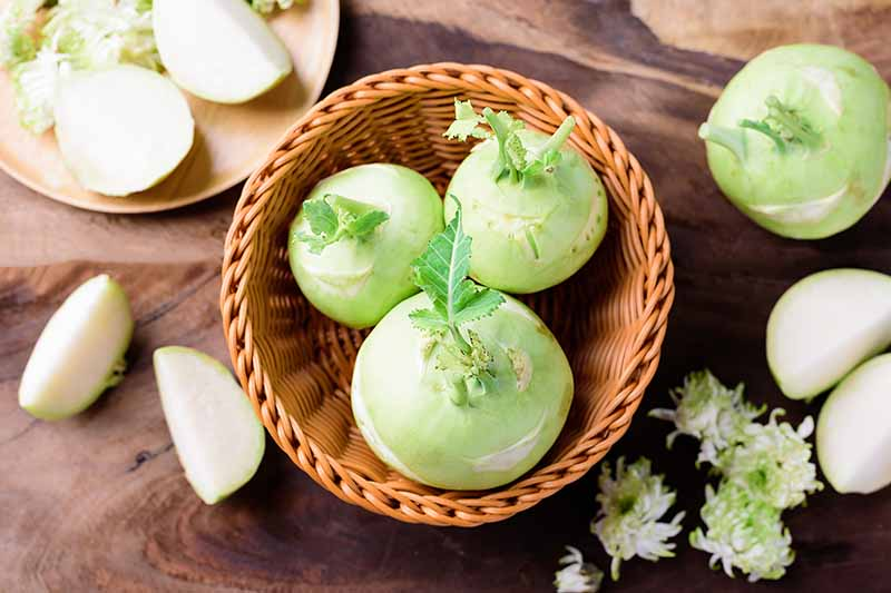 A close up horizontal image of freshly harvested kohlrabi set in a wicker basket on a wooden surface.
