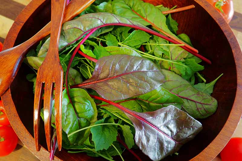 A close up horizontal image of a wooden salad bowl filled with mixed baby greens.