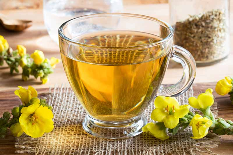 A close up horizontal image of a glass of mullein tea with small yellow flowers scattered around.