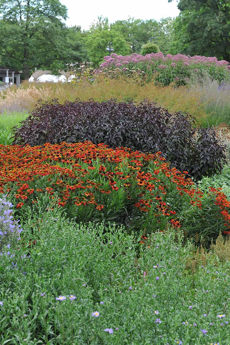 A close up vertical image of a variety of different native plantings in a backyard landscape.