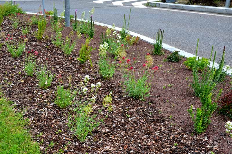 A horizontal image of a native planting beside a busy road junction.