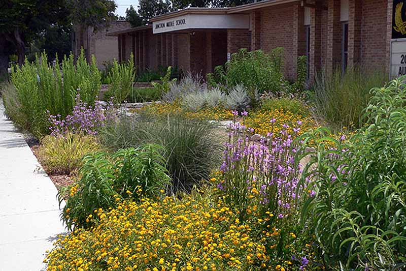 A horizontal image of a perennial wildflower garden outside a school library.
