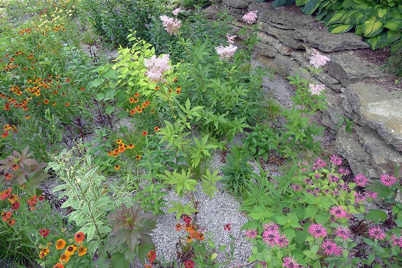 A close up horizontal image of a native wildflower garden with a variety of different plantings with a stone wall in the background.