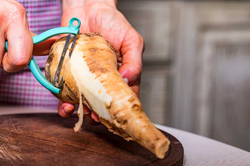 A close up horizontal image of two hands from the left of the frame using a peeler to take the outer skin off a freshly harvested parsnips.
