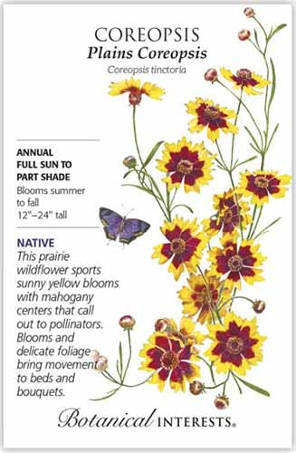 A close up vertical image of a seed packet of plains coreopsis with text to the left of the frame and a hand-drawn illustration to the right.