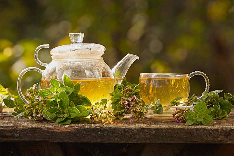 A close up horizontal image of a pot and cup of oregano herbal tea set on a wooden surface with herbs scattered around pictured on a soft focus background.