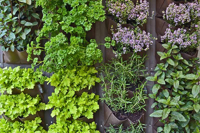 A close up horizontal image of a vertical herb garden growing a variety of different plants.