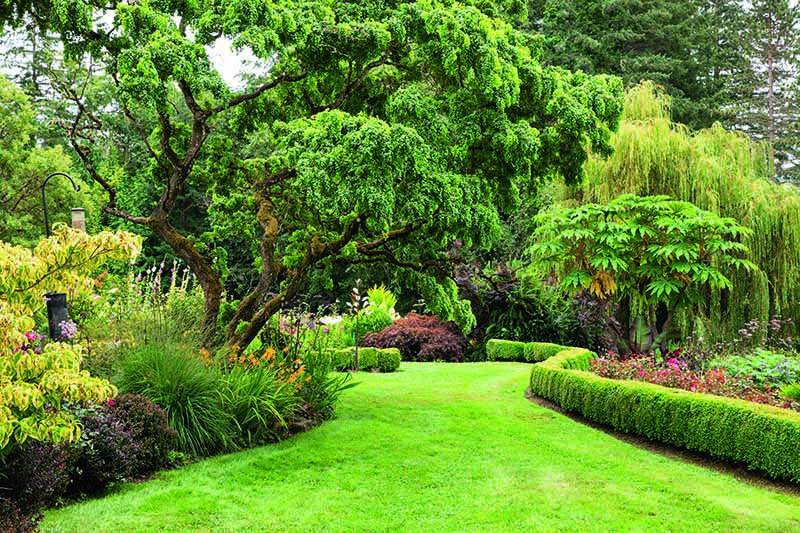 A horizontal image of a formal garden with lawn, box hedges, foliage plants and trees.