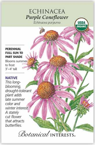 A close up vertical image of a seed packet of purple coneflower (Echinacea purpurea), with text to the left of the frame and a hand-drawn illustration of the plant to the right.