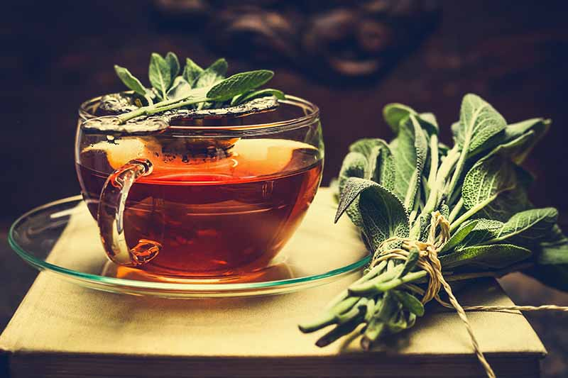A close up horizontal image of a cup of herbal tea with bunches of sage set on a wooden surface beside it.