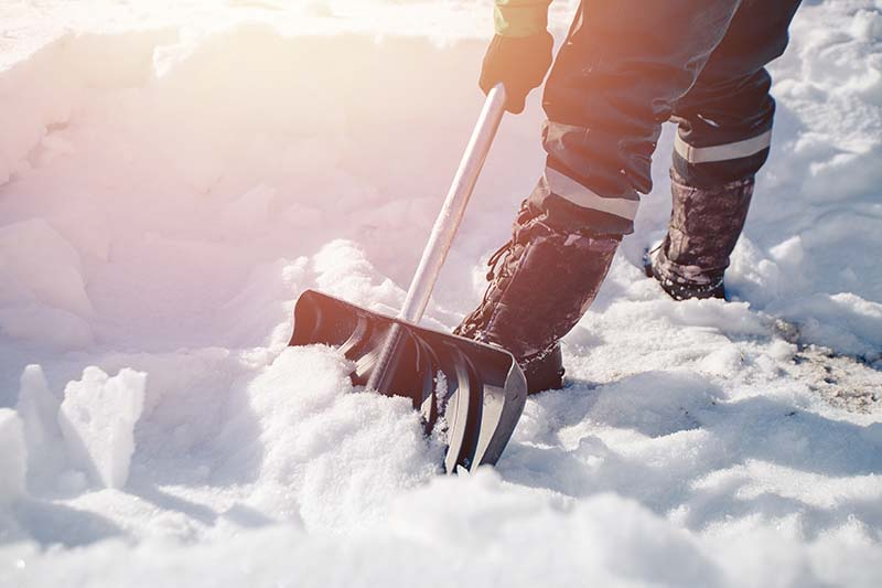 A close up horizontal image of a gardener on the right of the frame shoveling snow from a driveway.