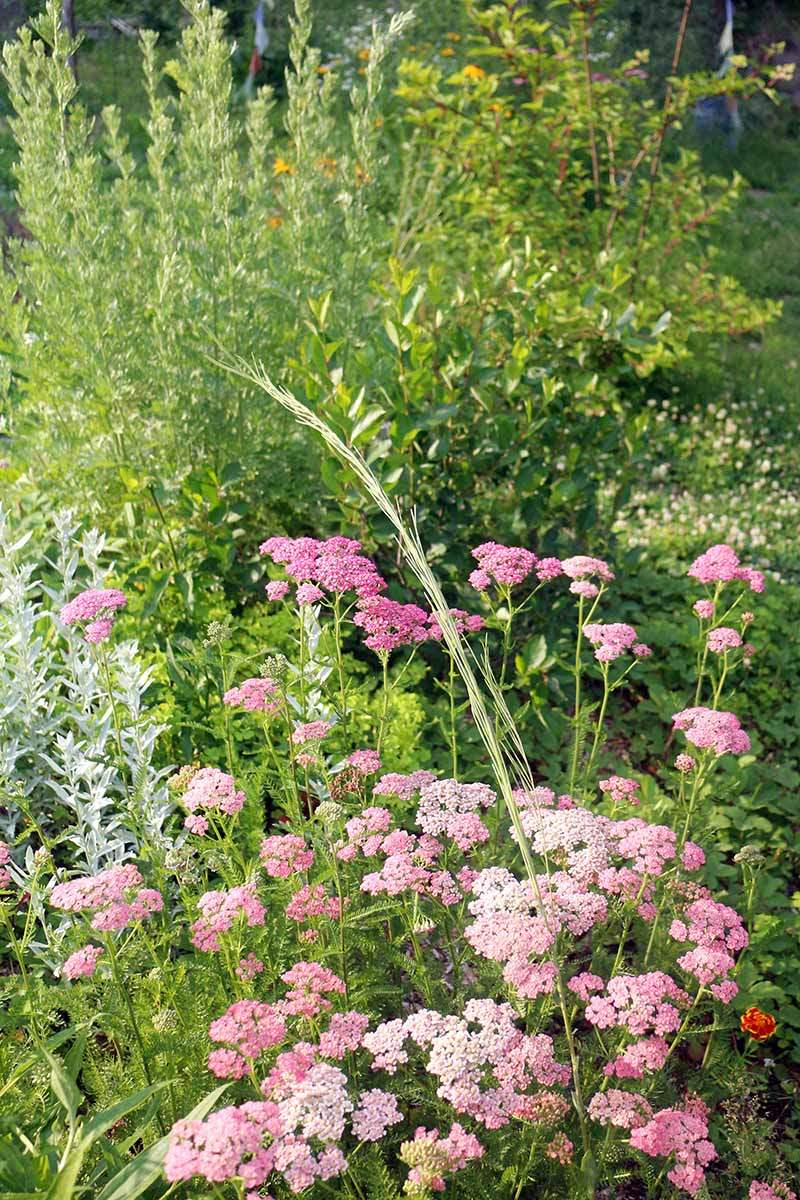 A close up vertical image of a permaculture food forest planted with a variety of different perennials and flowers.