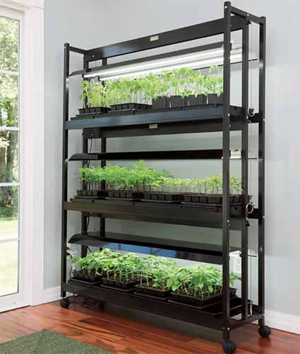 A close up vertical image of the SunLite three-tier indoor garden set on a wooden surface next to a door.