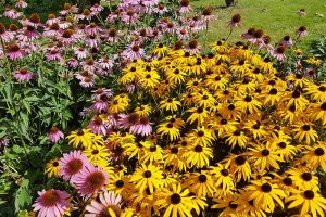 Birds, Bees, and Beauty: Tips for Growing a Native Wildflower Landscape at Home