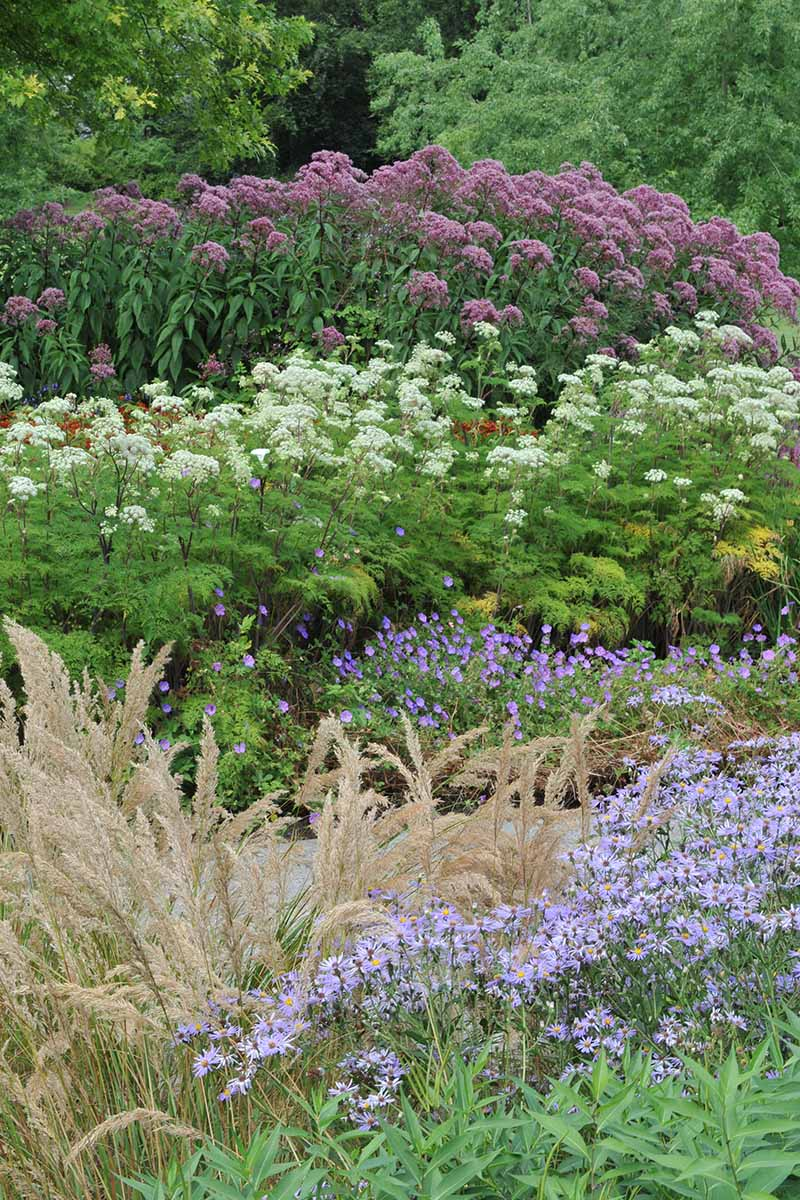 A vertical image of a native wildflower landscape with a variety of different plants and flowers.
