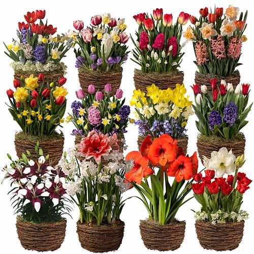 A close up square image of twelve little plant pots each growing different flowers.