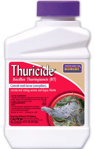 A close up vertical image of a bottle of Bonide Thuricide isolated on a white background.