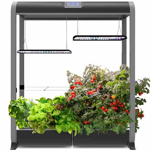 A close up square image of the Aerogarden indoor hydroponics kit with a variety of different herbs and tomatoes, isolated on a white background.