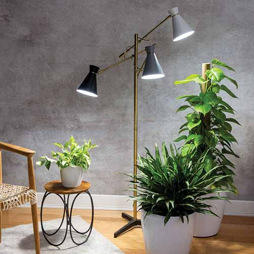 A close up square image of an indoor grow lamp next to a chair and three houseplants.