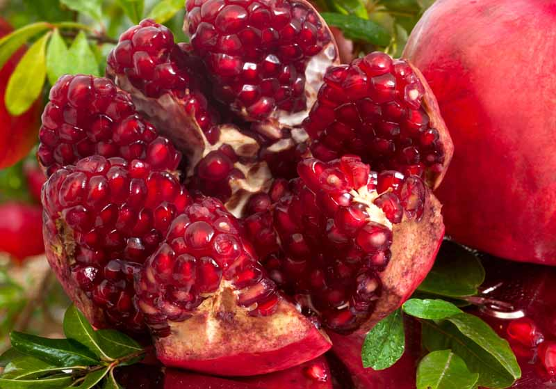 A close up horizontal image of a pomegranate that has been cut open to reveal the arils inside.