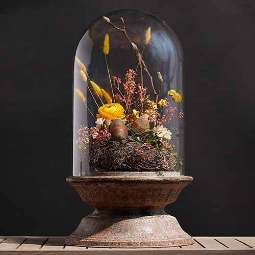 A close up square image of a display cloche with a zinc stand set on a wooden surface on a dark soft focus background.