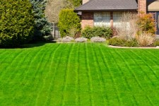 how to green grass and fix bare spots